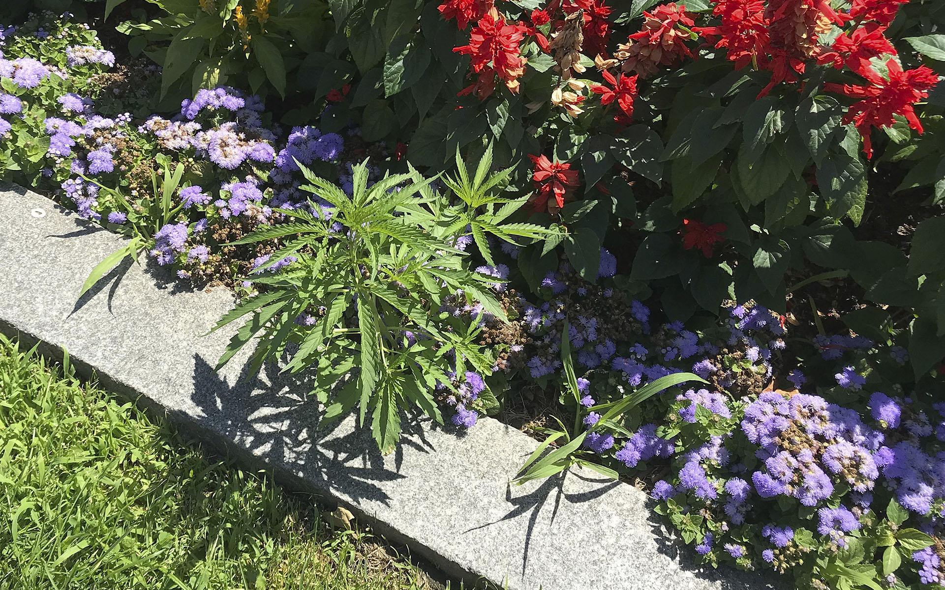 vermont statehouse cannabis - header image