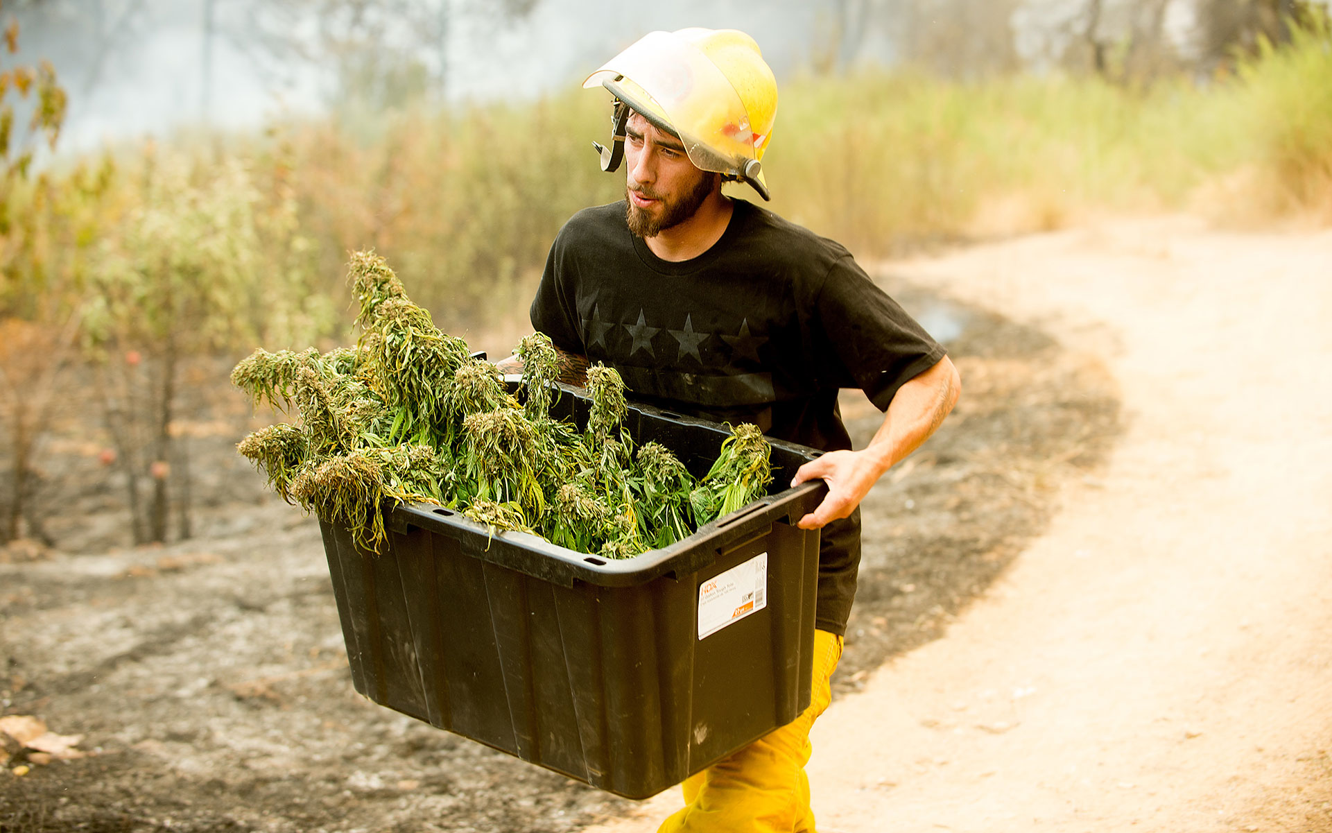 image: cannabis farmer saves crop from wildfires