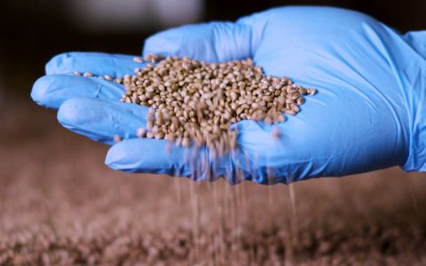 post-image-How Hemp CBD Products Are Made: CBD Protein Powder With Manitoba Harvest
