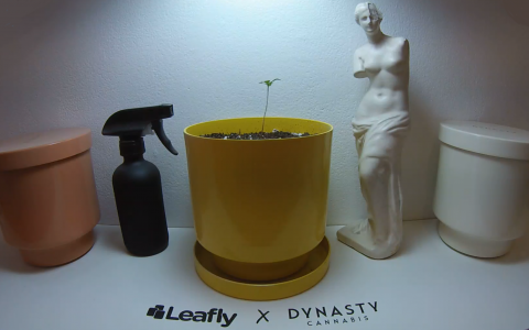 post-image-Leafly Canada's Grow Cam: Watch Us Grow!