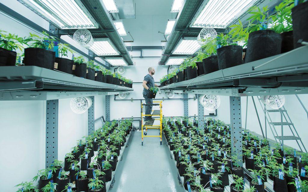 vertical growing, vertical farming, cannabis growing, growing marijuana
