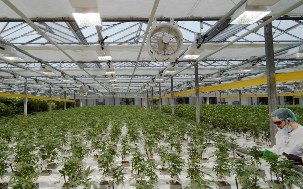 canntrust facility grow room