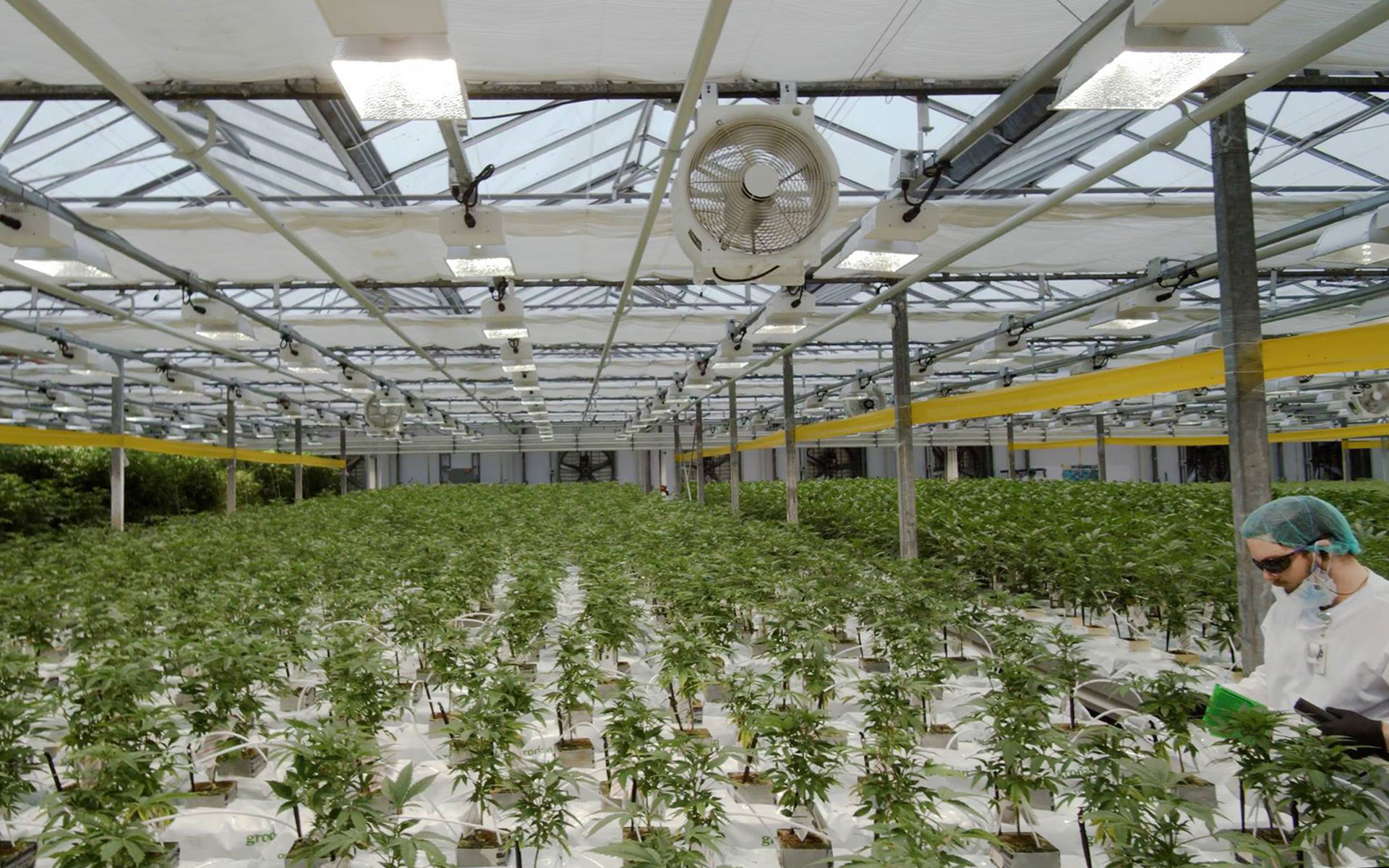 CannTrust Shares Dip, Second Cannabis Facility Rated Non-compliant