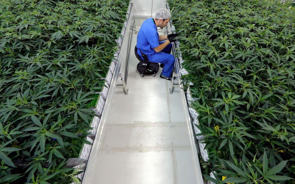 louisiana medical marijuana, cannabis in louisiana