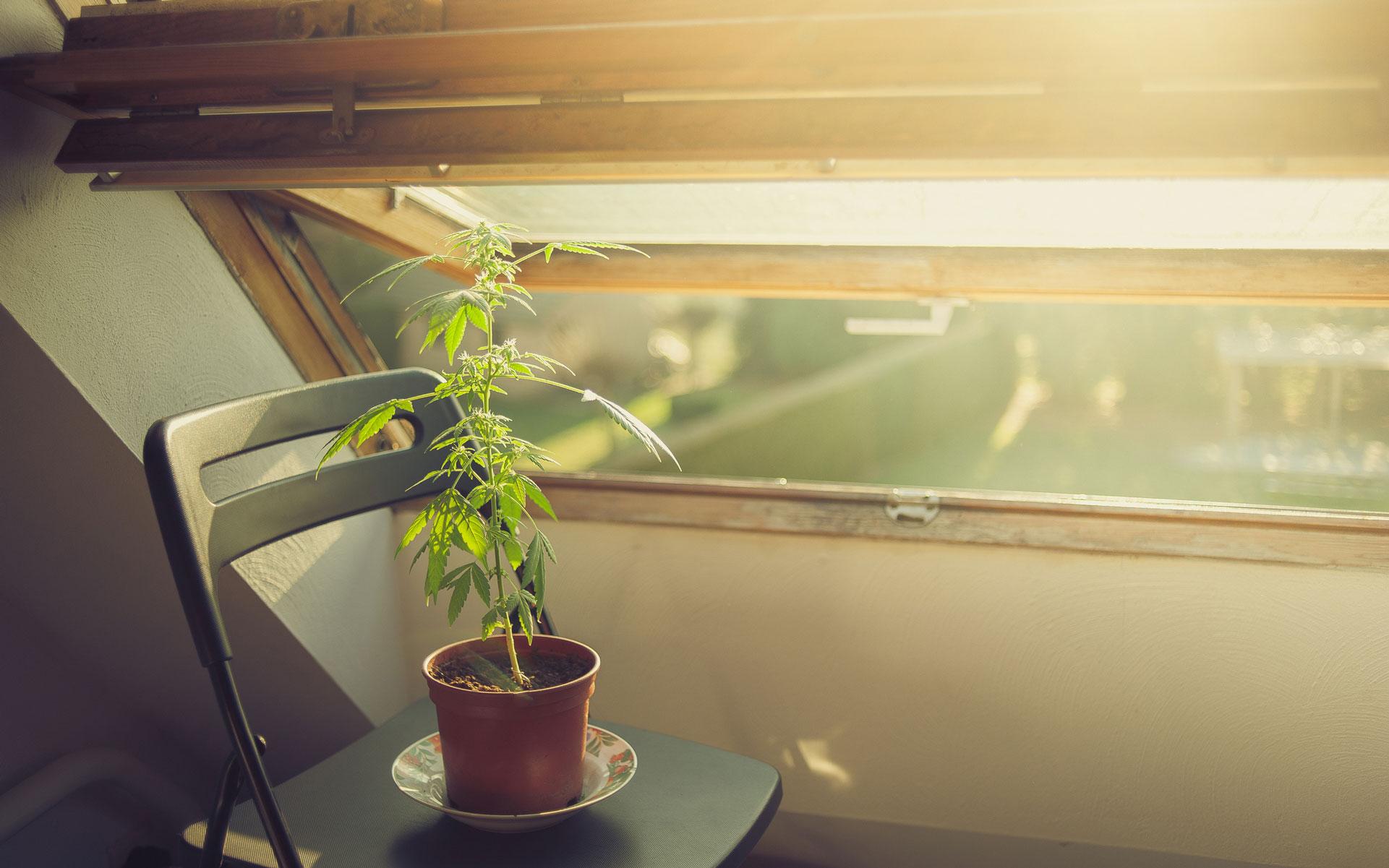 home plant grow