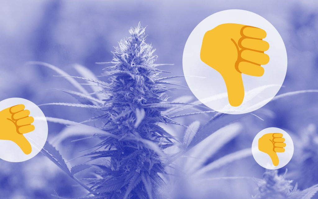 Opinion: Jack Herer (the Cannabis Strain) Is Overrated   Leafly