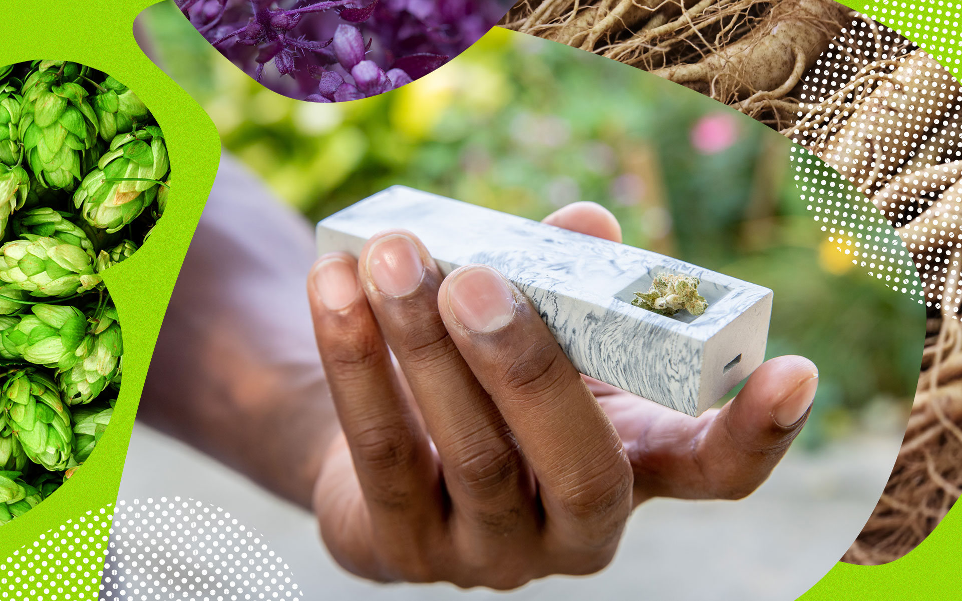 Canadian Cannabis Strains for People Who Love Humulene thumbnail