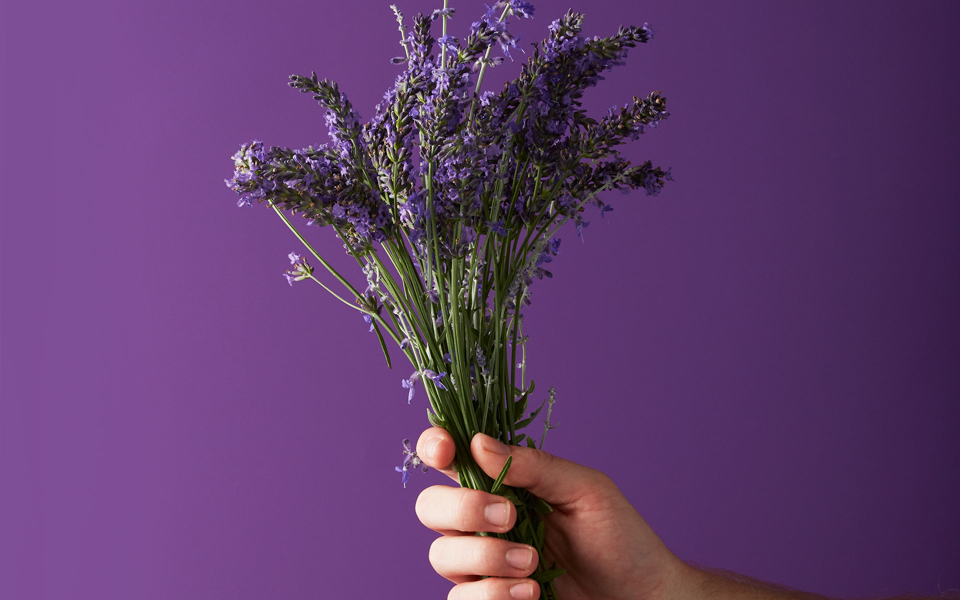 What is linalool & what does this cannabis terpene do?