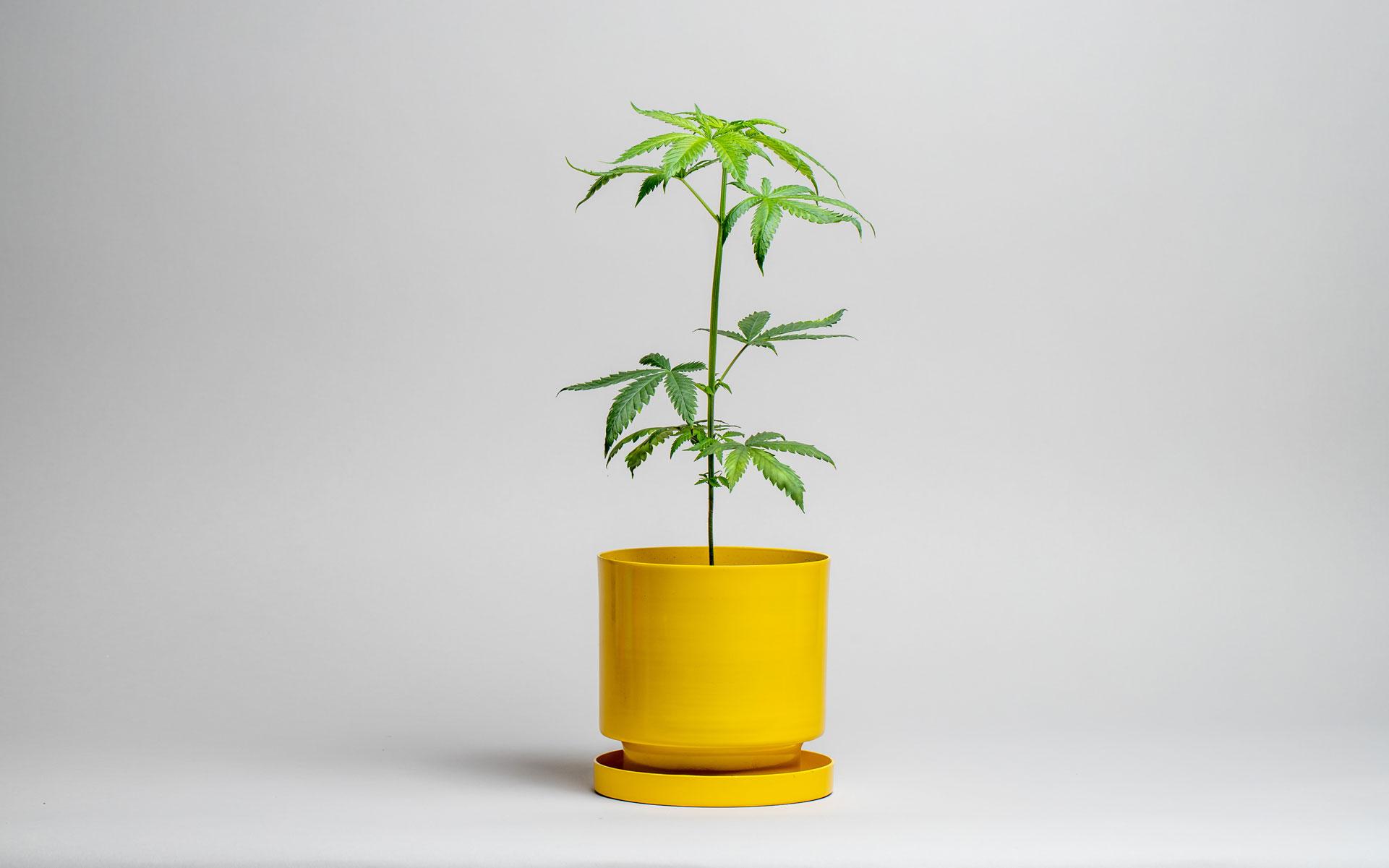 home grow harvest