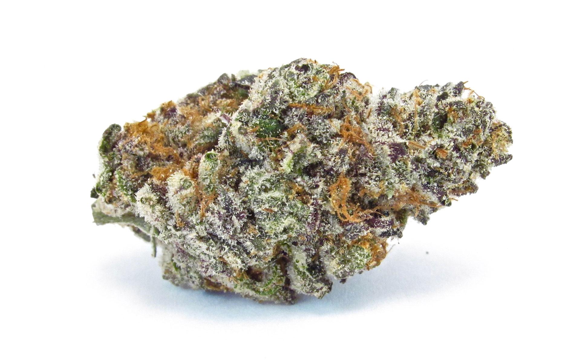 marijuana harvest strains Occidental Hill's Banana OG—the best of the bunch. (David Downs/Leafly)