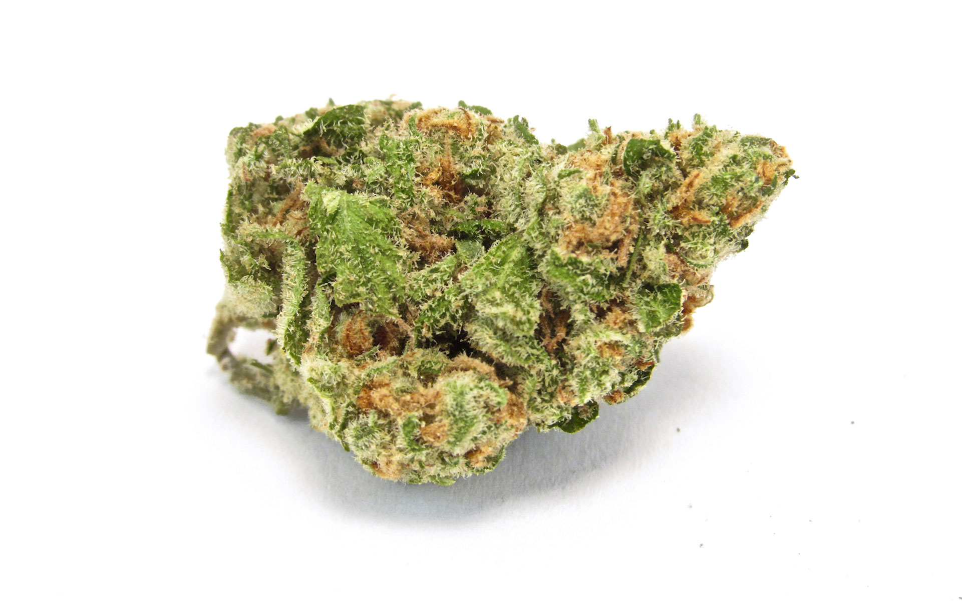 The Top 9 Cannabis Strains Of The Fall 2019 Harvest Season