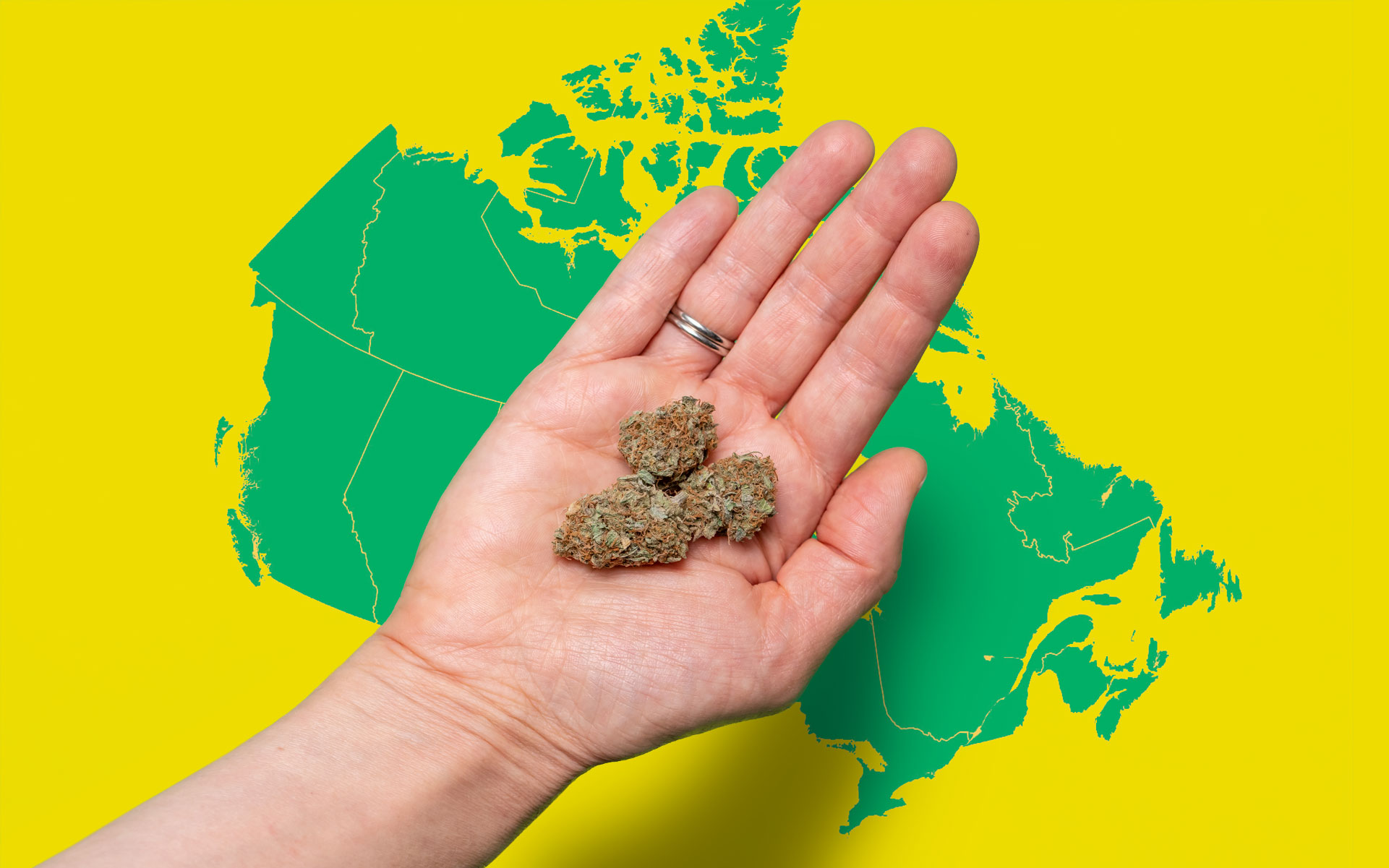 Canada map and hand holding buds