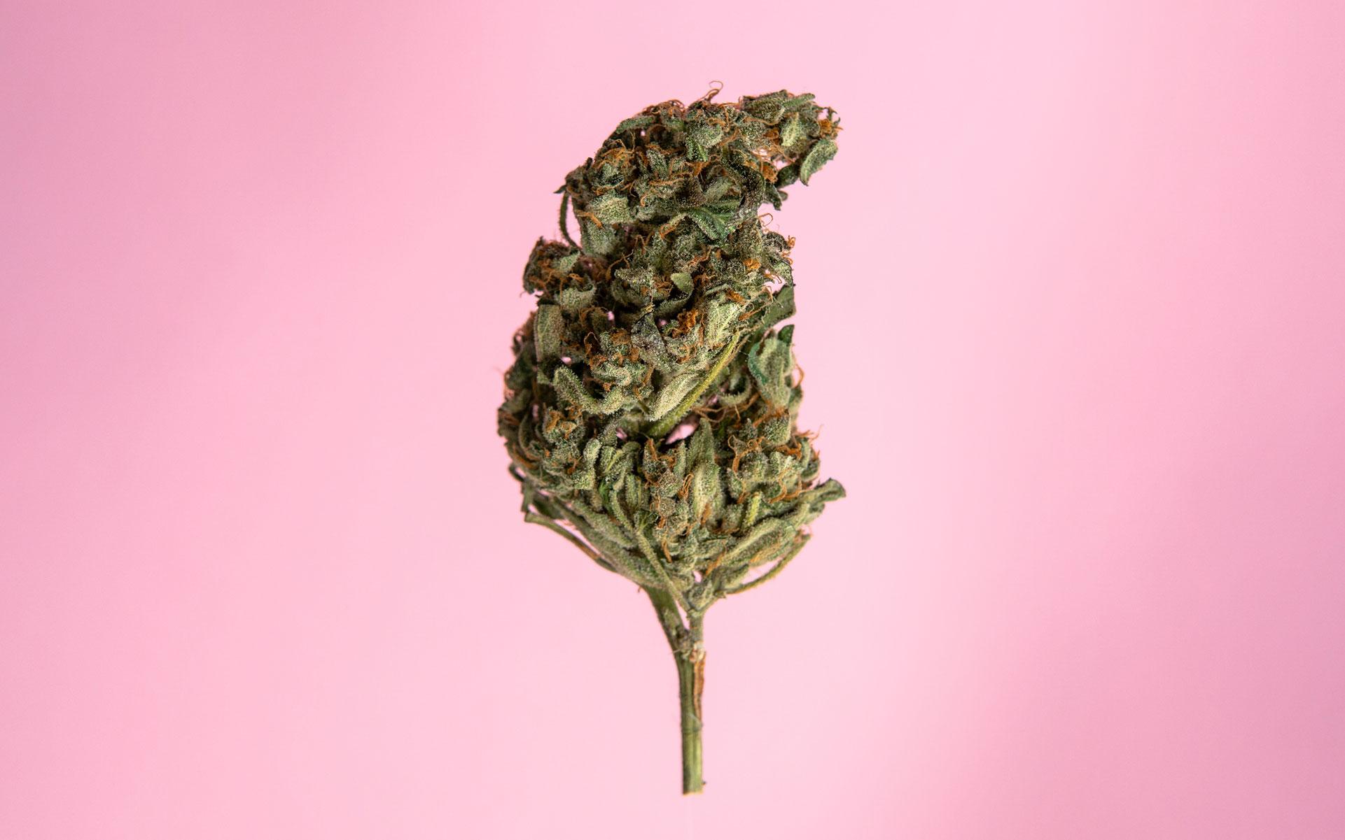 autoflowering, cannabis, marijuana, growing