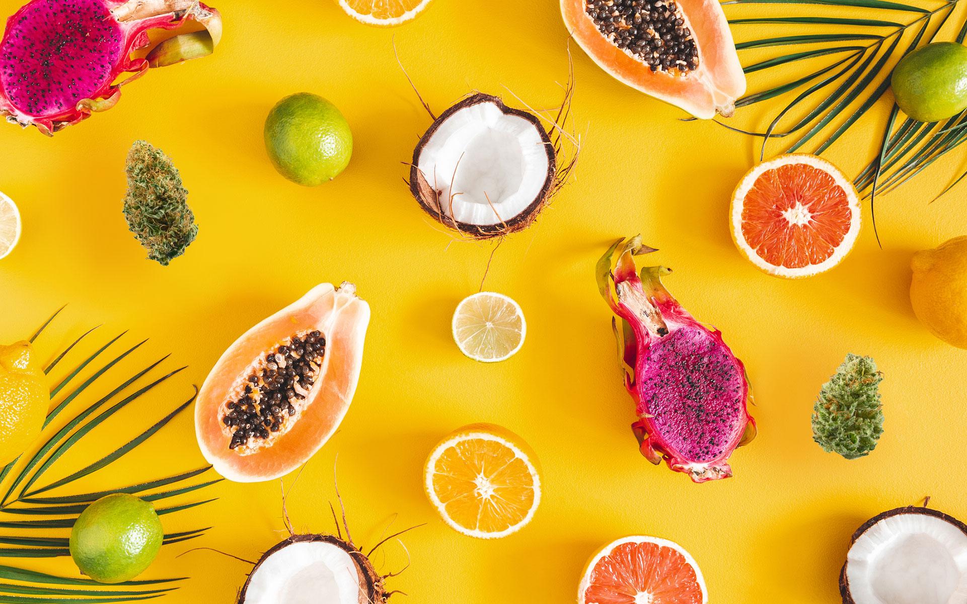 tropical terpenes, strains