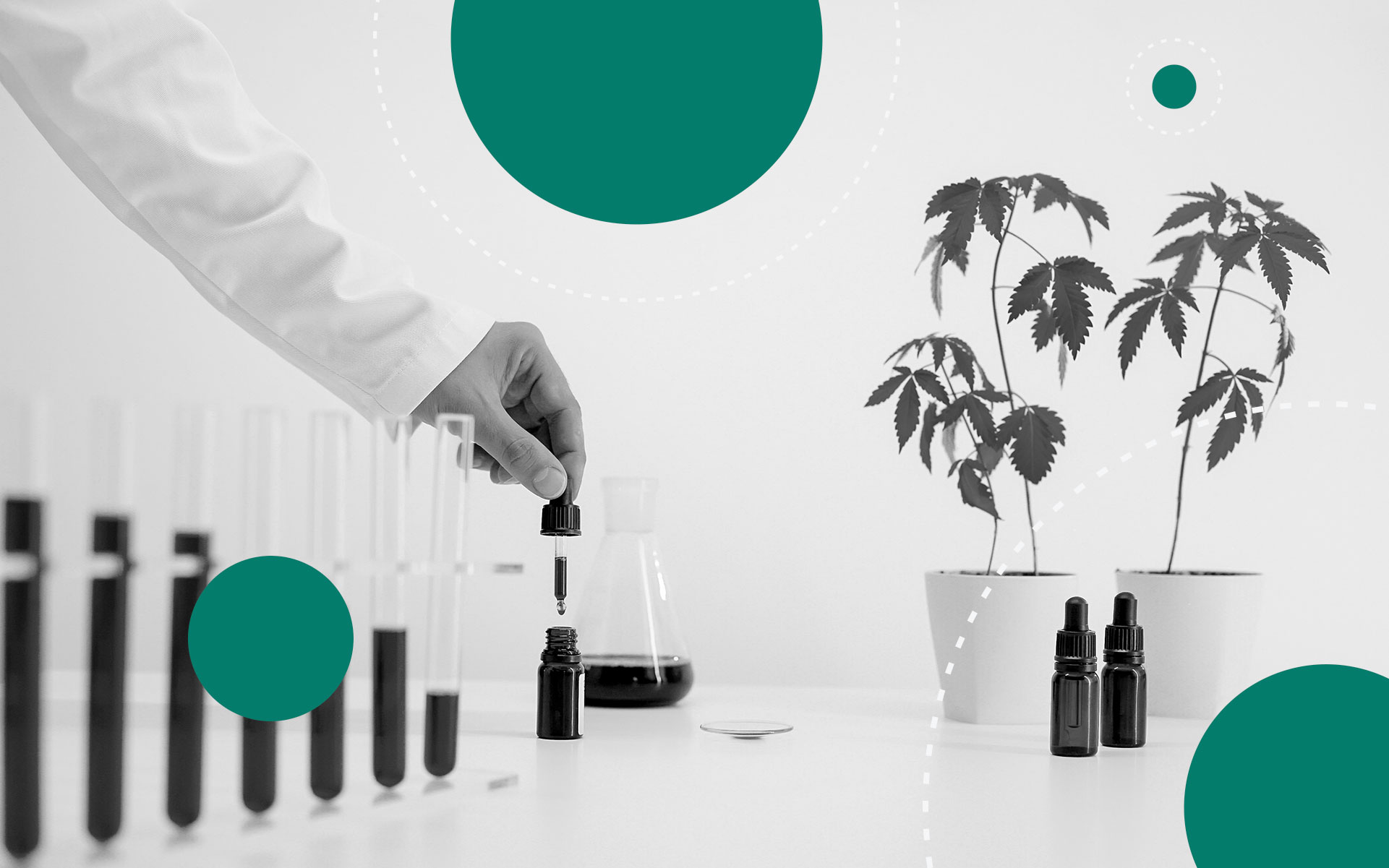 cbd potency, marijuana, lab analysis