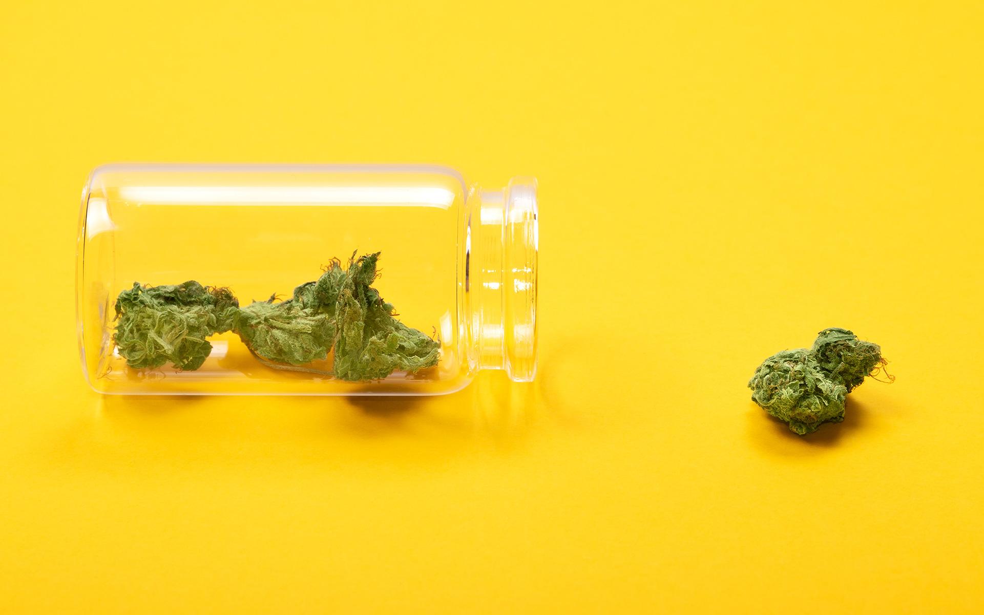 CBD marijuana strains, THC marijuana strains, growing cannabis