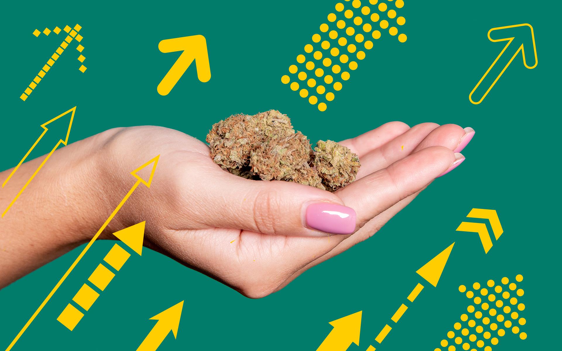 top trending marijuana strains of 2019, best marijuana strains of the year, which strains to smoke