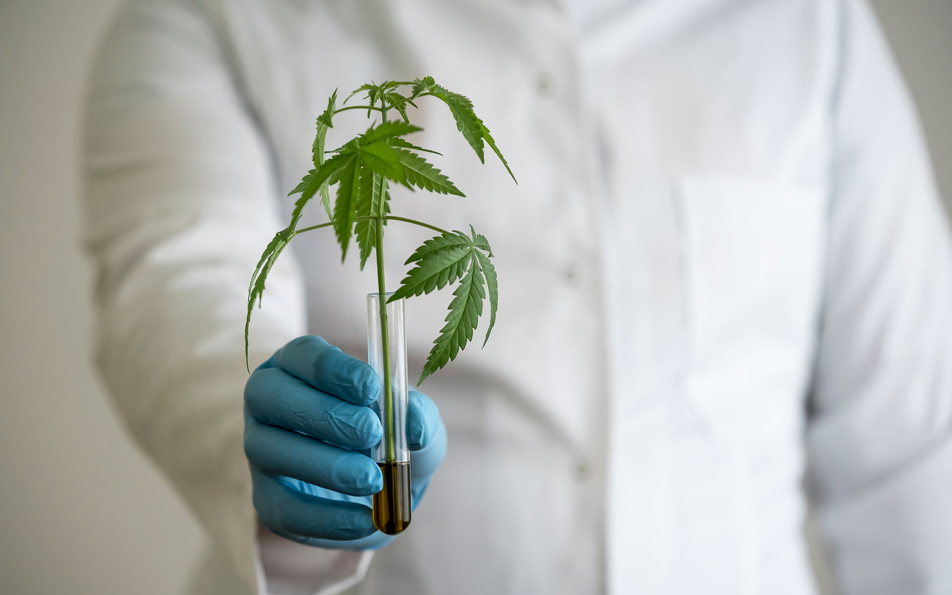 new cannabis research, medical research about effects of marijuana