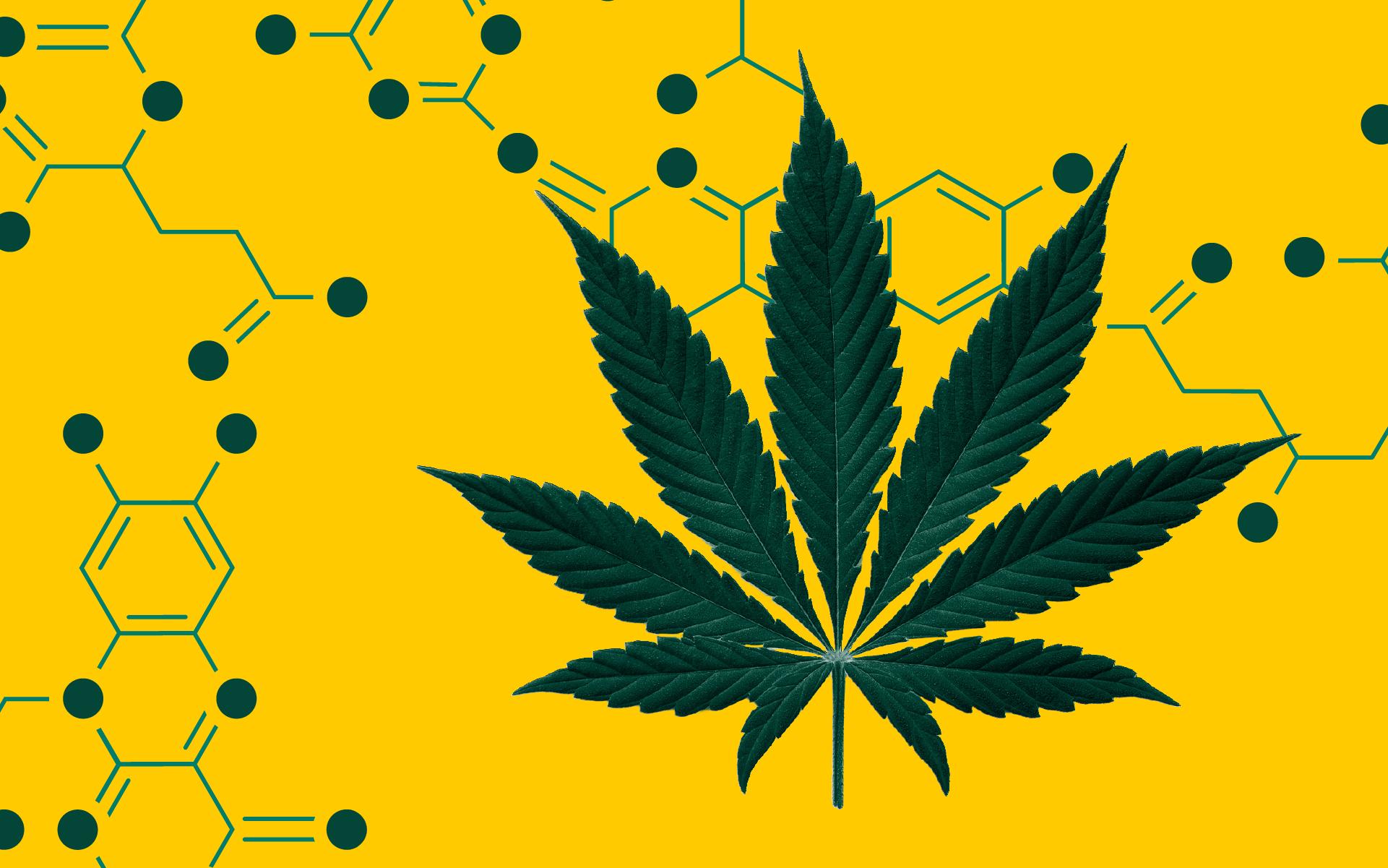 cannabinoids, thc, cbd, thcp, cbdp, brain chemistry and cannabis