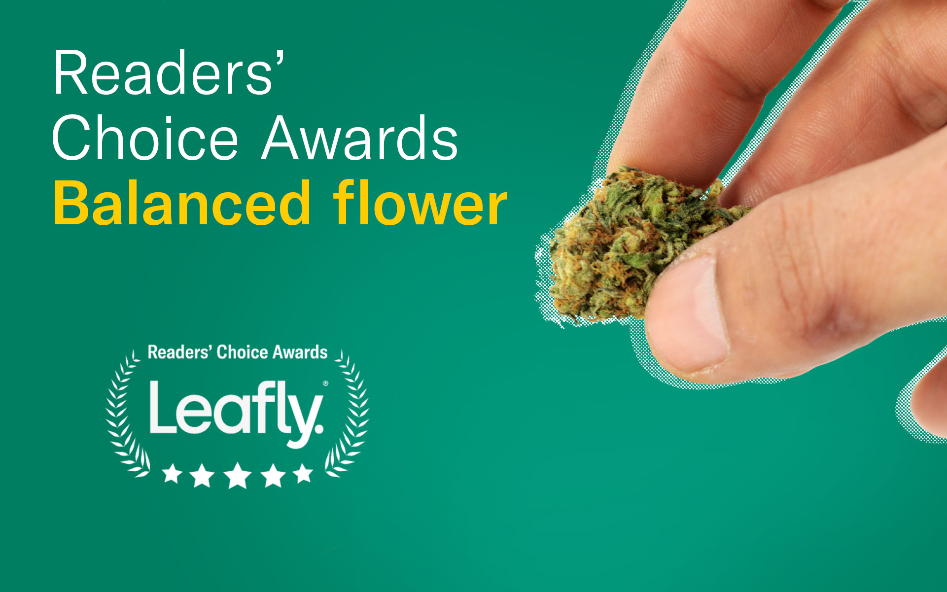 leafly canada readers choice favourite balanced flower