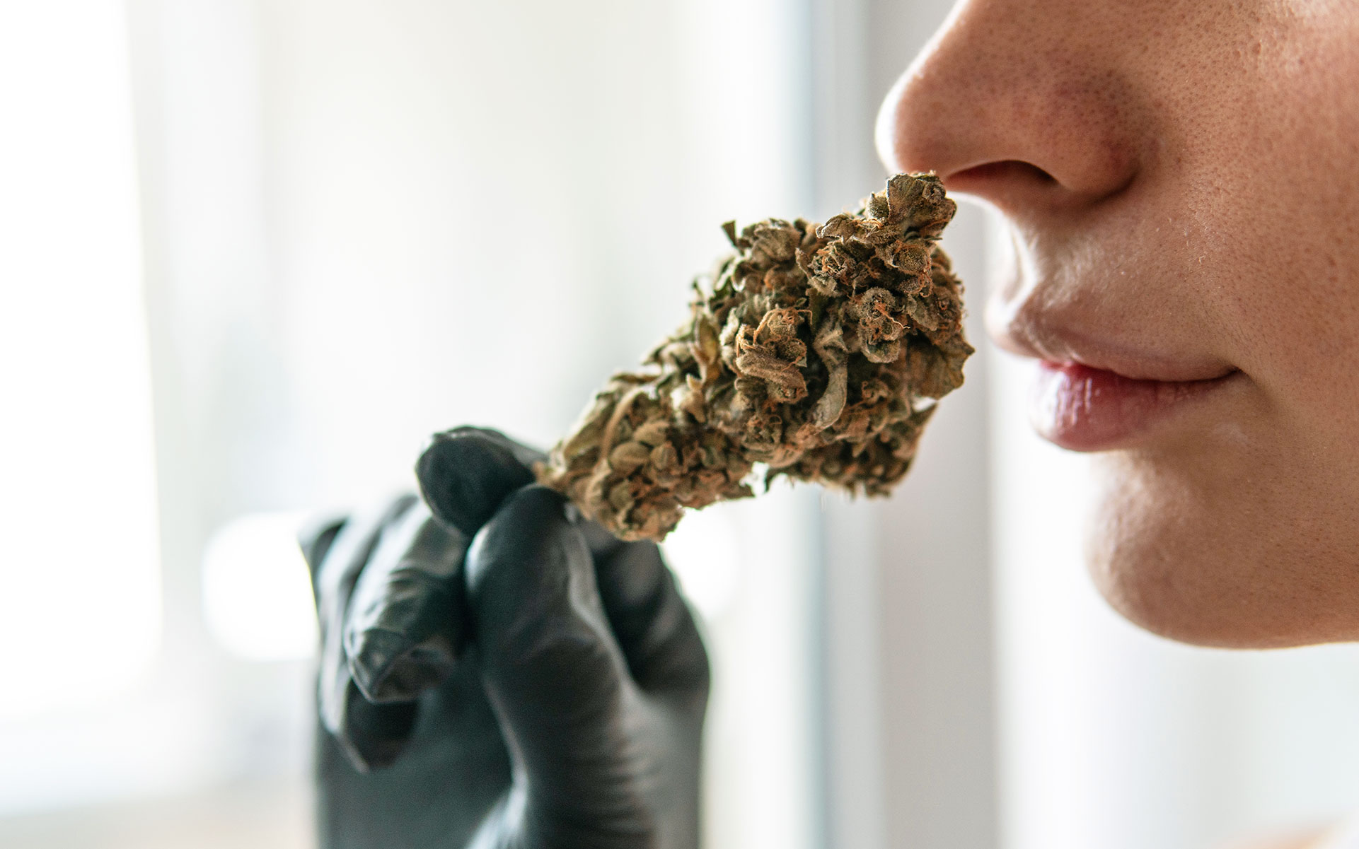 smelling cannabis before buying