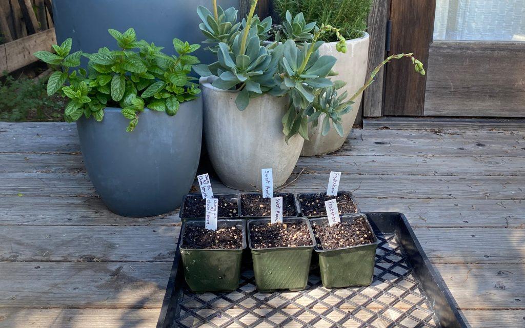 cannabis, homegrow, Leafly